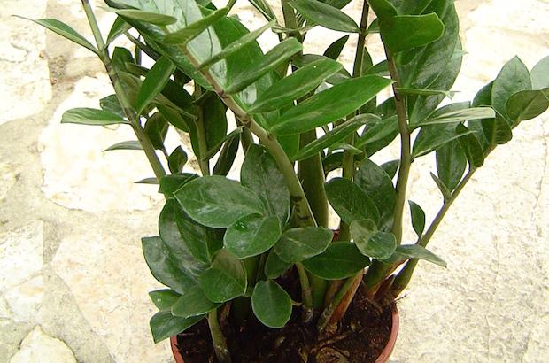 Arredamento di interni le piante per la casa sara carboni - Piante verdi interno ...